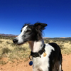 national park paws blog article posts guest author